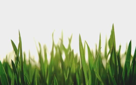 Kortrapport: Green Deals